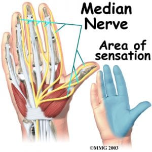 Median Nerve - Mississauga Pain Clinic