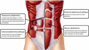 Core Muscles Anatomy Tag Anatomy Of Core Muscles Human Anatomy ...