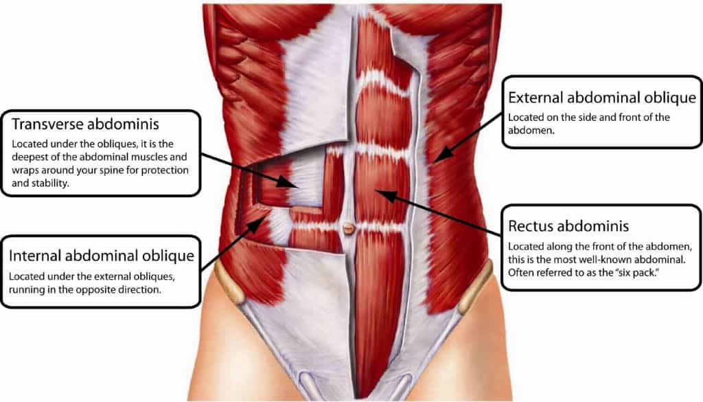 Core Muscles Anatomy Tag Anatomy Of Core Muscles Human Anatomy